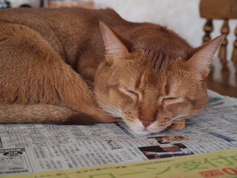 新聞、好きなのよっ04(2010.01.18)