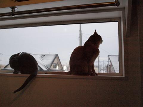 窓辺のニコジョゼ01(2010.01.25)