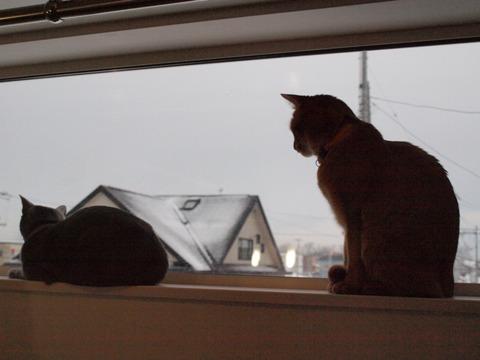 窓辺のニコジョゼ02(2010.01.25)