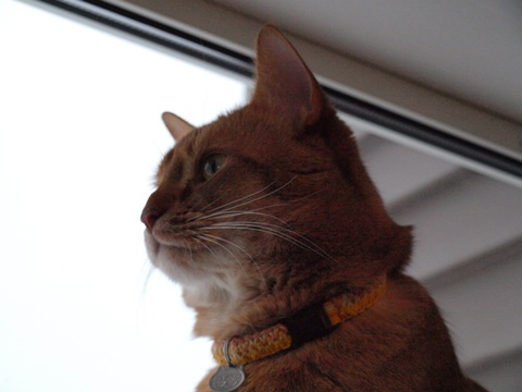 窓辺のジョゼ01(2010.01.25)