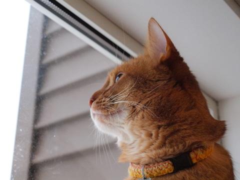 窓辺のジョゼ03(2010.01.25)
