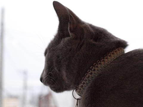 窓辺のニコ01(2010.01.25)