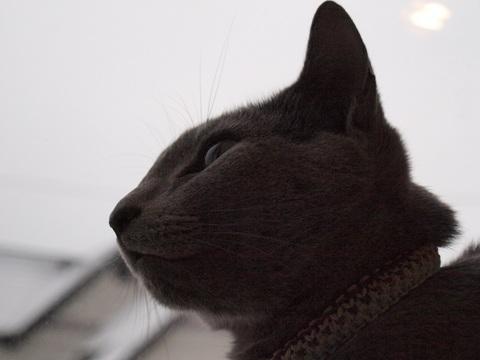 窓辺のニコ02(2010.01.25)