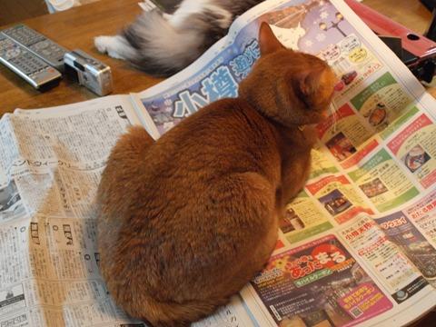 新聞の上なのよっ(2010.02.01)