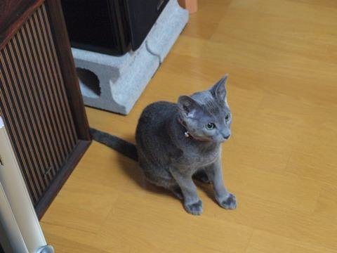 よちっ!(2010.02.06)