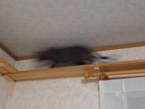 走る!(2010.02.06)