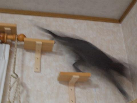 走る!走る!(2010.02.06)