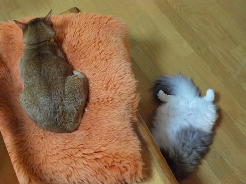 姉妹の寝姿(2010.02.11)