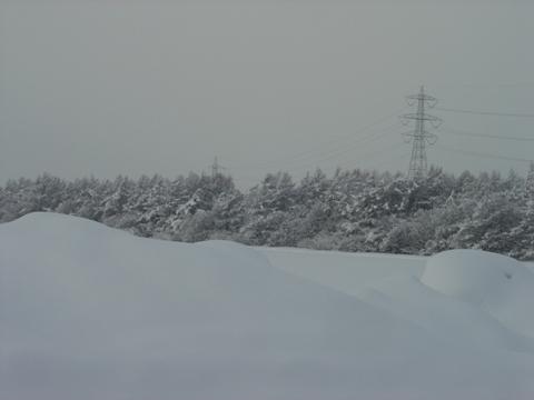 防雪林(2010.02.16)