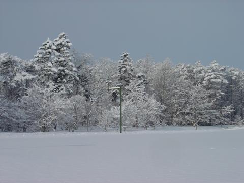 職場地方、雪だらけ(2010.02.16)