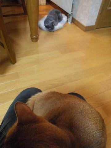ねむねむニコとあまあまジョゼ(2010.02.16)