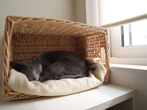 窓辺ですやすや'(2010.02.28)
