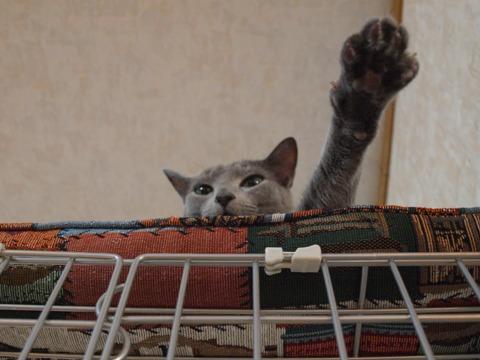 ニコの、屋上でも片手出し(2010.03.06)