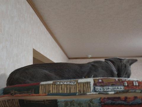 ケージの上だよ(2010.03.09)
