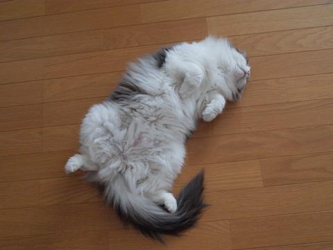 眠るフレイヤちゃん、ほんとです(2010.03.13)
