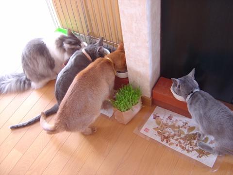 もくもくと食べる(2010.03.18)