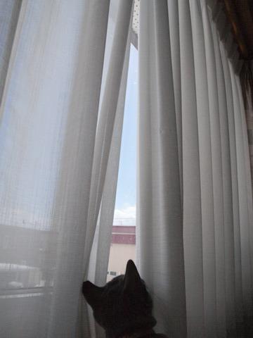 見つめるアレク04(2010.03.22)