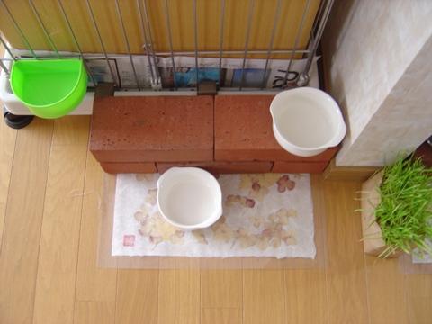 なぜお皿が?(2010.03.23)