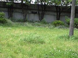May15_2010_park.jpg
