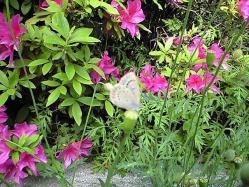 May9_2010_6.jpg
