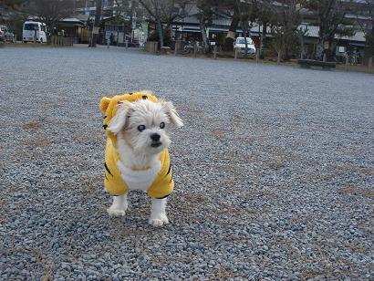 ごんちゃん 01010