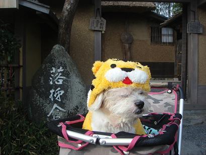 ごんちゃん 03131
