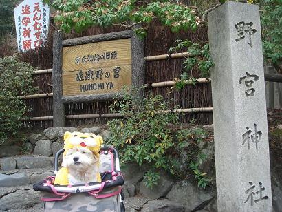 ごんちゃん 03232