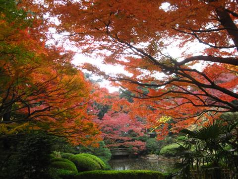 IMG_2373日本庭園