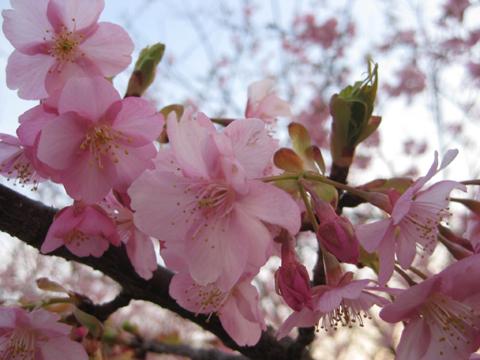 IMG_9199桜