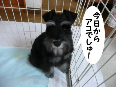 アコちゃん2月9日3