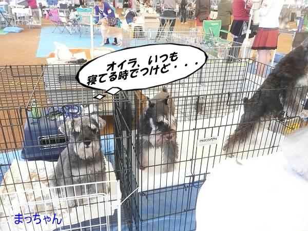 和気ショー10月13日-s