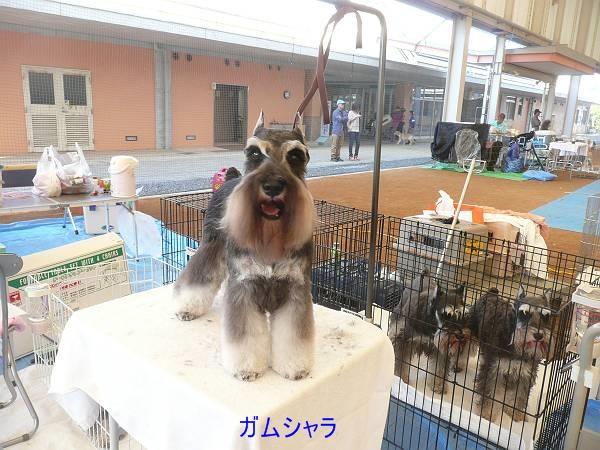 和気ショー10月13日1-s