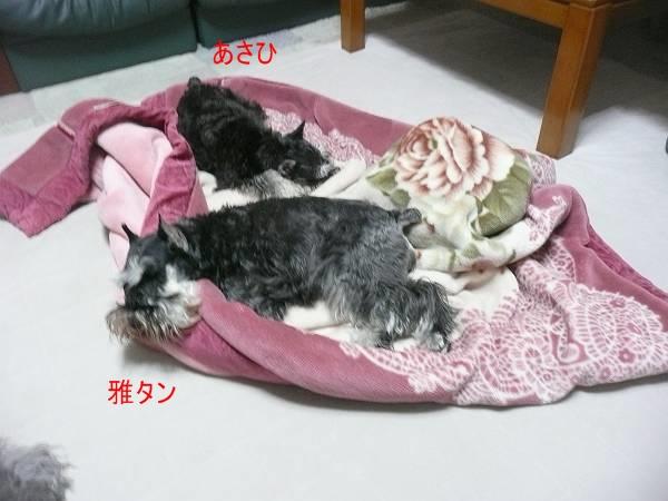 雅&あさひ10月27日-s