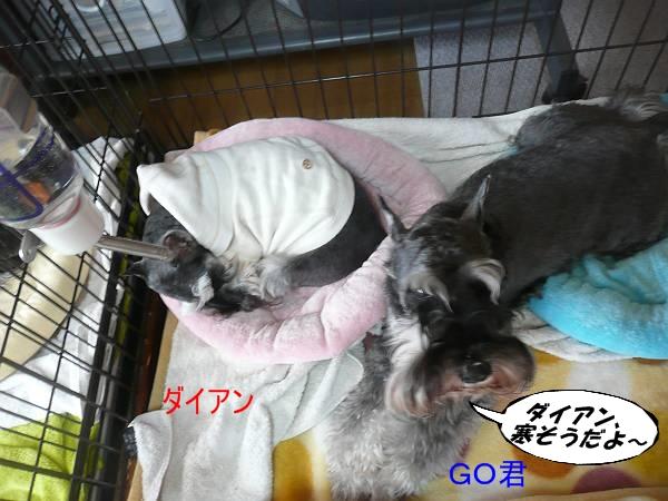 GO&ダイアン11月18日-s