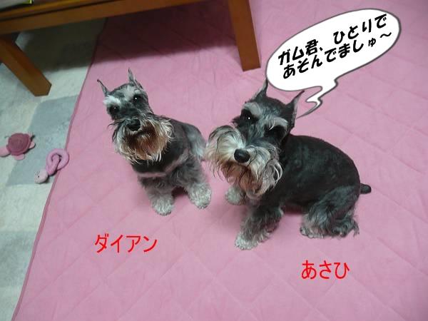 ダイアン&あさひ11月26日-s