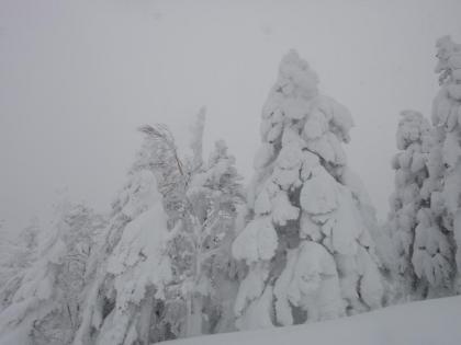 雪化粧する木々