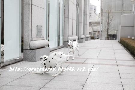 _MG_4985_convert_20120217203246-1.jpg