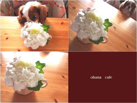 ohana-cafe.jpg