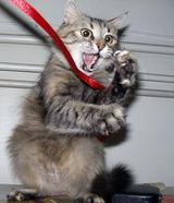 ボクサー猫