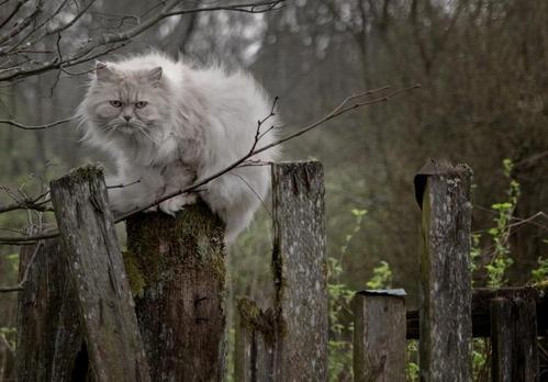 ワシは森の妖精じゃ