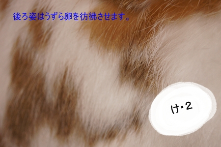 DSC08578_20130319220856.jpg