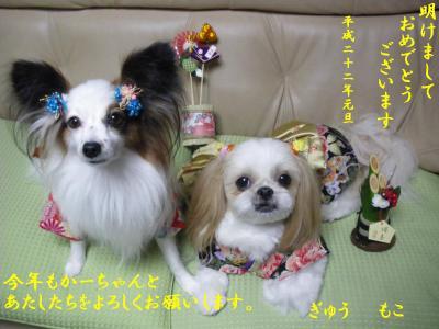 IMGP1343-nenga_convert_20100101015203.jpg