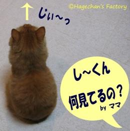cats0100