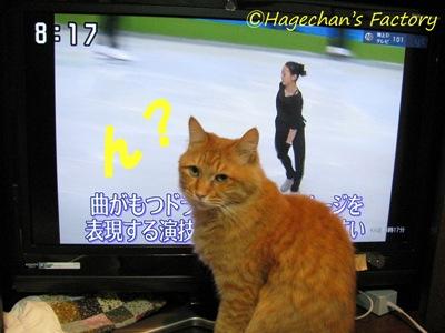 cats0101