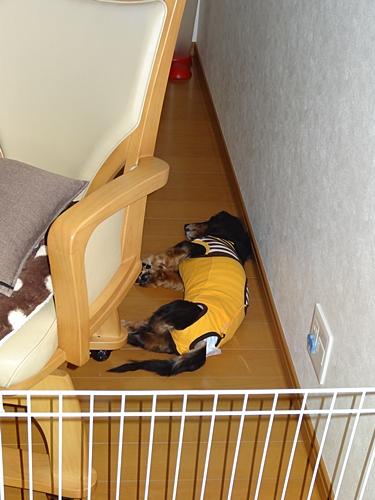野垂れ寝ダック1