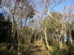 二川自然道IMGP2039