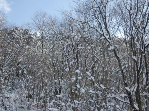 片知雪 014