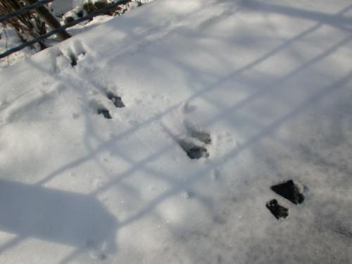 片知雪 010
