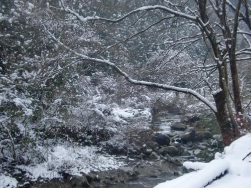 片知雪 023