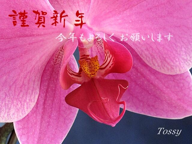 胡蝶蘭謹賀新年